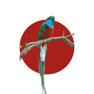 Faune du Costa Rica - Animaux - Quetzal