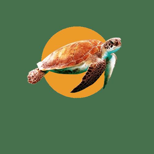 Faune du Costa Rica - Animaux - Tortue