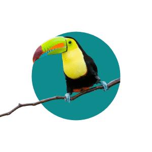 Faune du Costa Rica - Animaux - Toucan