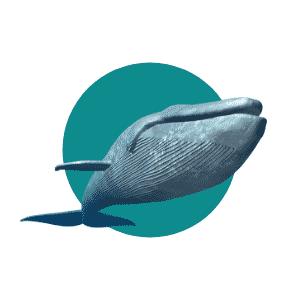 Faune du Costa Rica - Animaux - Baleine