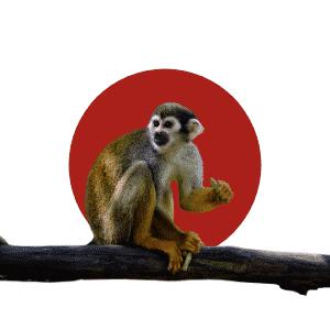 Faune du Costa Rica - Animaux - Singe