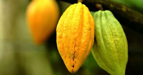 Les arbres fruitiers au Costa Rica feront votre bonheur