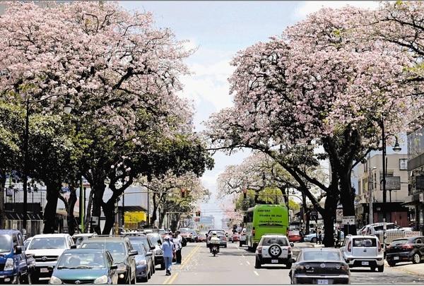 Les arbres avec les floraisons les plus belles du Costa Rica
