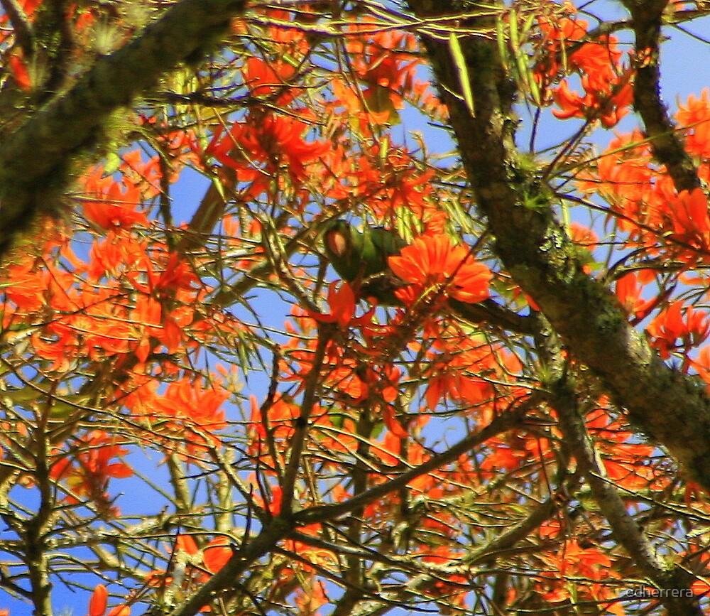 Les arbres avec les floraisons les plus belles du Costa Rica-poro