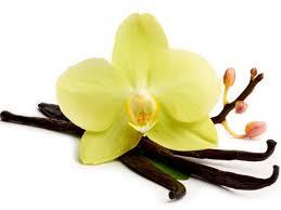 Les orchidées : Le Costa Rica, terre d'orchidées-vanille
