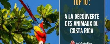 A la découverte des animaux du Costa Rica