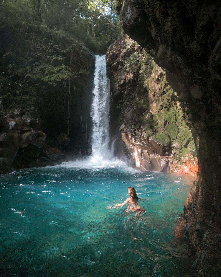 Cascade Oropendola au Costa Rica