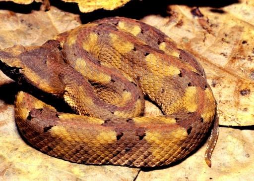 Les serpents du Costa Rica : Tout ce qu'il faut savoir