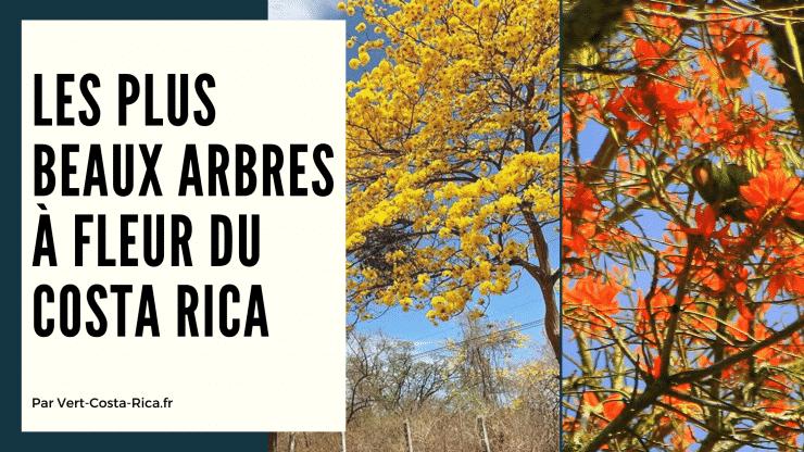 Les plus beaux arbres en fleur du Costa Rica